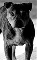 My Dog Noah.....