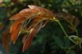LEAVES-20111124-7000