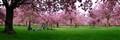 DPR_Spring
