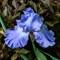 Flowers_05_11_14-1-5G