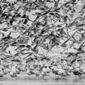 A flock of sea gulls