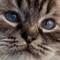 Cat100percent