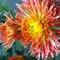 My Garden Flower 3