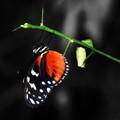 Butterfly World - St Albans UK