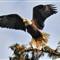eagle hdr.jpg2400