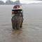 Rain. Lak Lake. Vietnam