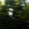 Emerson_I._Kamiya_2014042102_bambuzal_1_-_var._2