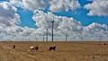 Wind Farm and Horses