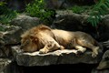 Lion 6124