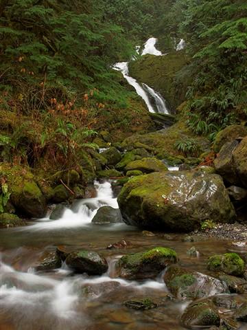 Quinault Falls - 2010