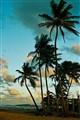 Vega baja  beach, PR