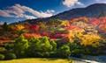 A riot of autumn colour