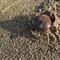 The (Im)mortal Crab, Fujairah