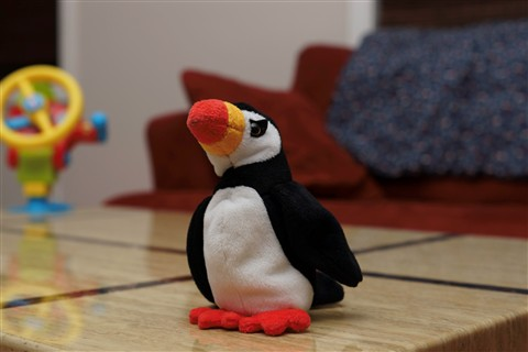 puffin-2