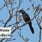 DSCN1703 1000mm blackbird +++