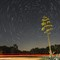 Century Plant and Star Trails