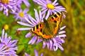 AN 045 Butterfly