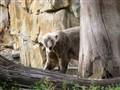 Knut - Polar Bear in Summer Suit