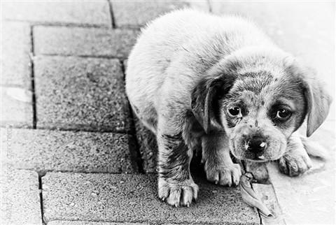 street_dog_FF