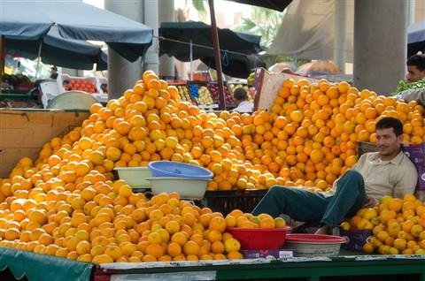 PvdWerf_101217_Marokko_767