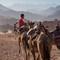 egypt_camel