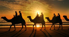 Camel sunset ride
