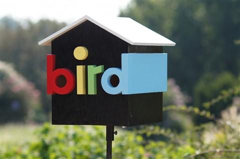 birdh