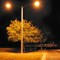 Tree at Night Lamp post Challenge 30007 MG_5483