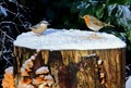 Nuthatch and Robin on a cold and frosty day.