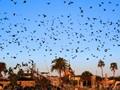 Birds Flying over Galveston Cemetary