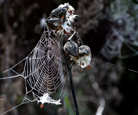 Webs and Pods