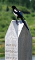 Black Bird on Grave