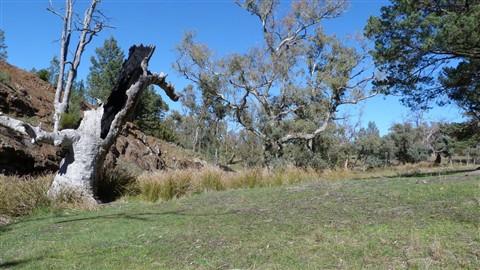 Warren Gorge Flinders Sth Aust