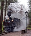 Steam in the Forest