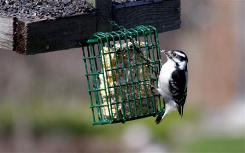Bird01a small