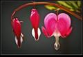 1-Flower004
