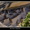 Mesa Verde Spring 2013