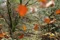 flying leaves
