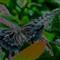 Smithsonian Butterfly Garden