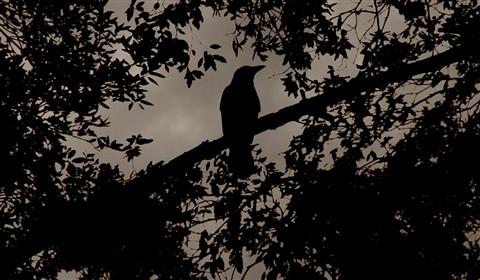 Bird of Yore