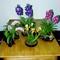 Art Flowers 1