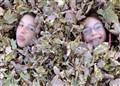 Leaf Faries