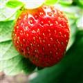 my favourite fruit...