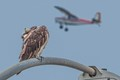 Osprey vs. Airplane-4857