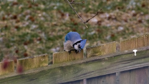 Pentax Birds-4712