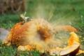 Pumpkin-splosion!