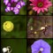 macro from tel aviv environmental garden