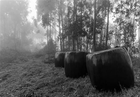 Asturias bags Mist