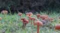small mushrooms.