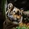jack's san diego zoo 247